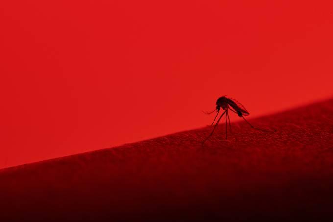 Casos de dengue aumentaram 432% e 222 pessoas morreram da doença neste ano