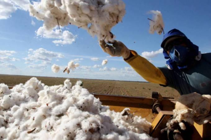 Brasil fecha safra de grãos com recorde de 242,1 milhões de toneladas